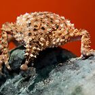 Knob Tailed Gecko Tail by Deborah  Janke