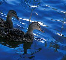 Pair of Ducks by Jim Haley