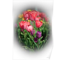 Tulips #3 Poster