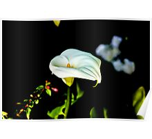 Flower Love Poster