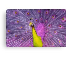 Different coloured Peacock, yellow+purple. Canvas Print