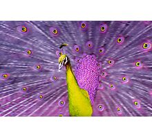 Different coloured Peacock, yellow+purple. Photographic Print