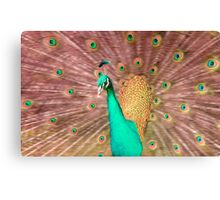 Pink and turquoise coloured Peacock Canvas Print