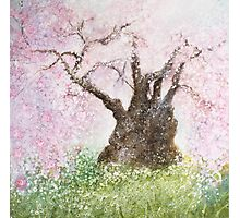 Jindai Zakura (2000 year-old cherry tree) Photographic Print
