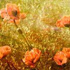 Poppy field by nefetiti