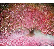 Completely blossom Photographic Print