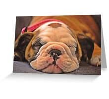 Sleeping puppy Greeting Card