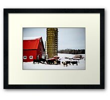 winter cows Framed Print