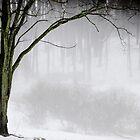 lonely tree by Elizabeth Pellette