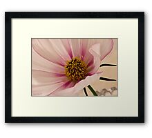 Pink Bi Color Cosmo Macro Framed Print