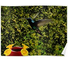 Hummer In Watercolor Poster