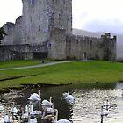 Ross Castle, Killarney by David O'Riordan