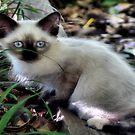 Little Blue eyes by Carla Jensen