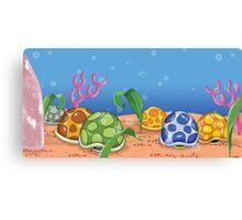 Turtle Shells Canvas Print