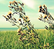 Thistle on the Beach by Michelle Calkins