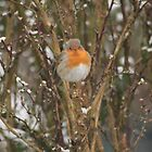 The Robin Redbreast  by Pamela Jayne Smith