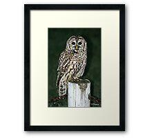 Neighborhood Owl Framed Print