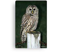 Neighborhood Owl Canvas Print