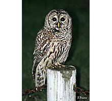 Neighborhood Owl Photographic Print