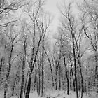Winter in the woods b&w by DrewK
