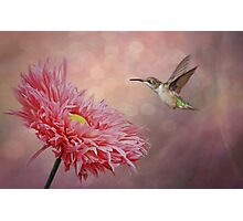 Dance of the Hummingbird Photographic Print