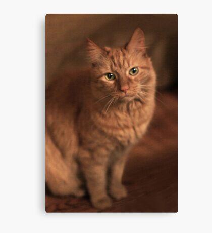 Just Cat ~ Canvas Print