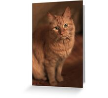 Just Cat ~ Greeting Card