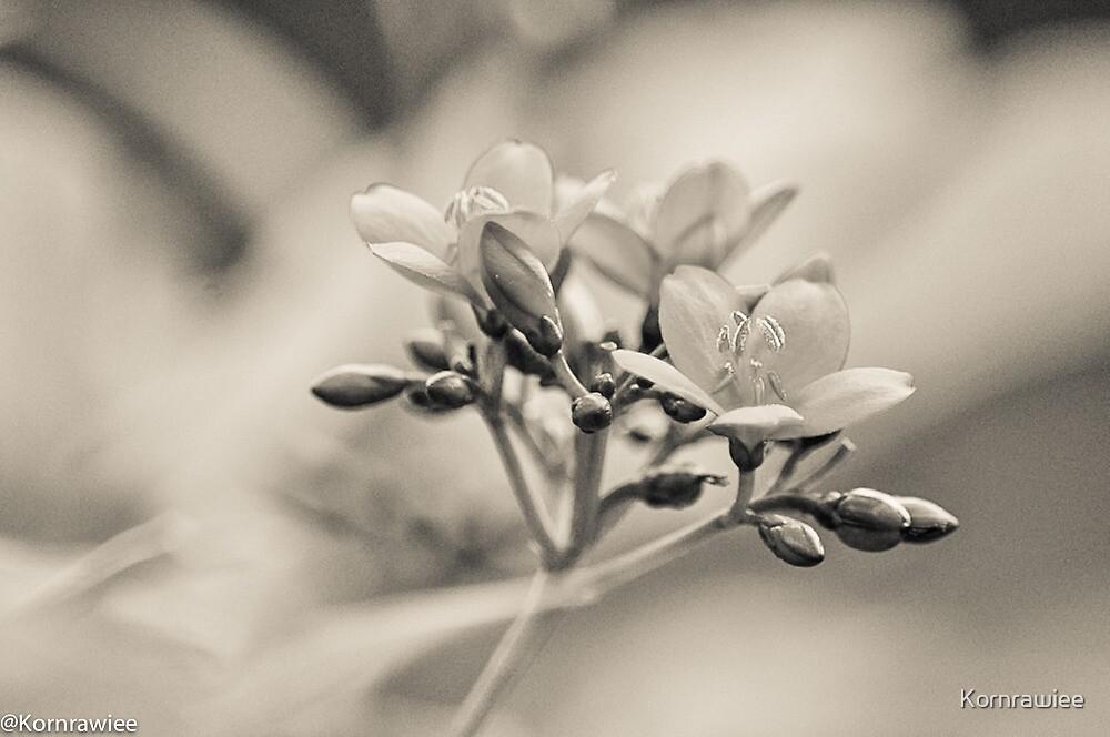 Happiness is...flowers... by Kornrawiee