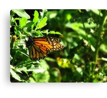 Butterfly's Kiss Canvas Print