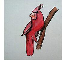 Territorial Cardinal Photographic Print