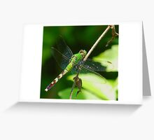Green Dragon(fly) Greeting Card