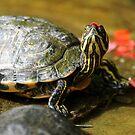 Turtle Headdress! by Tom Clancy