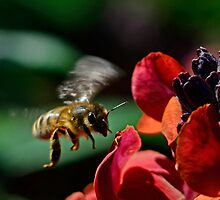 As the Bee Approaches the Flowers by imagetj