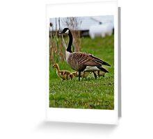 Spring Sprung Greeting Card
