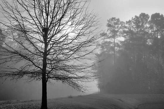 Morning Fog by Dawne Dunton