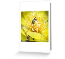 Cactus Flower Visitors Greeting Card