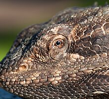 Bearded Dragon close up! by Deborah  Janke