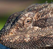 Bearded Dragon close up! by Deborah  Janke