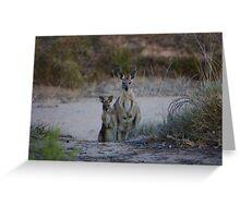 Curious Kangaroos Greeting Card