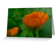 Flower and Flower Greeting Card