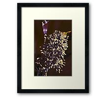 Bromeliad center stalk Framed Print