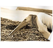 Pelican Series 7. Poster