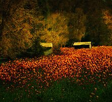 Field of Fire by pat gamwell