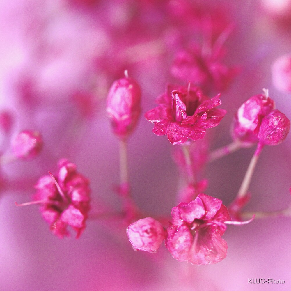 Pink Dreams by KUJO-Photo