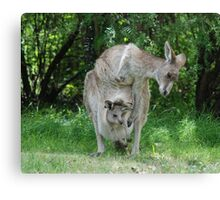 """Mother kangaroo and """"in pouch"""" joey  Canvas Print"""