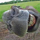 Donkey Grin by philipclarke