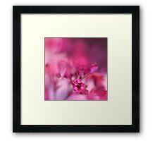 Pink Phantasy Framed Print