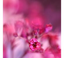 Pink Phantasy Photographic Print