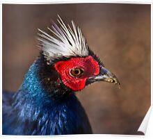 Vietnamese Pheasant Poster