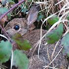 Behind the brambles - a rabbit by elainejhillson